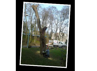 L'élagage d'un arbre dans le Val-de-Marne
